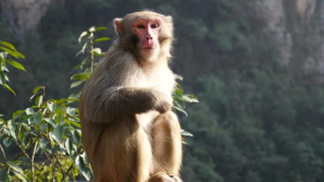 Close-up van een volwassen aap