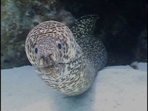 Close-up of a moray eel in the sea
