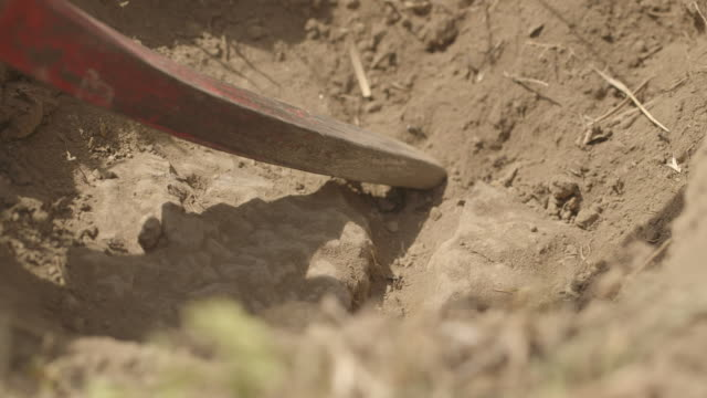 Close-up of a pick-axe being used to break into dry soil containing rocks on the savannah, Tanzania.