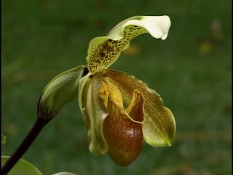 vídeos y material grabado en eventos de stock de close-up of a pitcher plant - planta pitcher