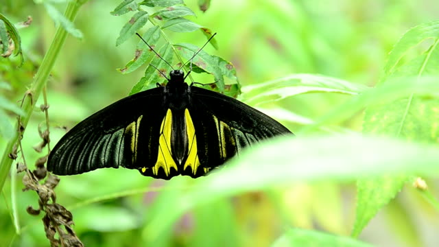 close-up of a pretty butterfly - animal colour stock videos & royalty-free footage