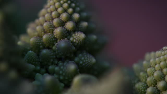 close-up of a romanesco cauliflower - still life stock videos & royalty-free footage