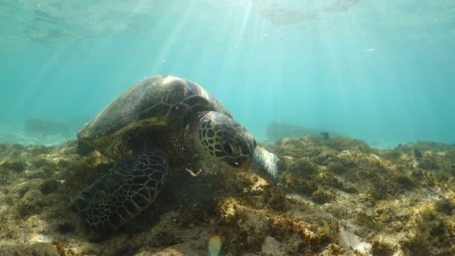 closeup of a sea turtle, seaweed, and underwater sunshine - 海草点の映像素材/bロール