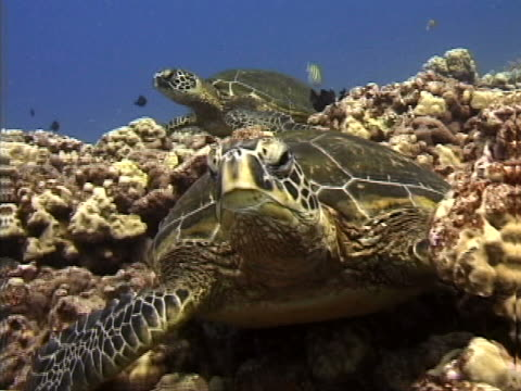 close-up of a sea turtle - tierisches exoskelett stock-videos und b-roll-filmmaterial