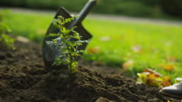 Close-up of a Shovel Tending Plant in the Garden.