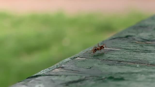 närbild av en liten brun myra krypa på en flisas målade yta utomhus - skadedjur bildbanksvideor och videomaterial från bakom kulisserna