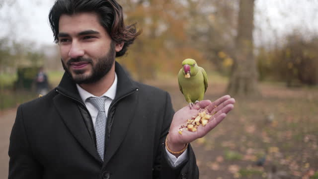 a close-up of a smart young man feeding a parrot - animal mouth stock videos & royalty-free footage