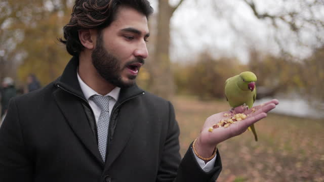 a close-up of a smart young man feeding a parrot - beak stock videos & royalty-free footage