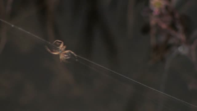close-up of a spider running along its web. - arctic national wildlife refuge stock videos & royalty-free footage