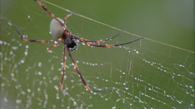 Close-up of a spider sitting in its web covered in dew drops.