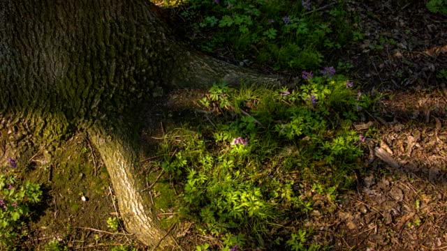vídeos de stock, filmes e b-roll de close-up de uma raiz de árvore - árvore de folha caduca