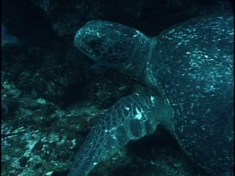 close-up of a turtle swimming in the sea - unknown gender stock videos & royalty-free footage