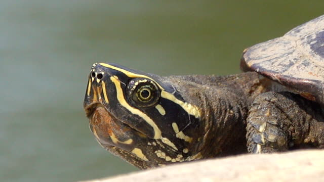 close-up of a turtle - animal shell stock videos & royalty-free footage