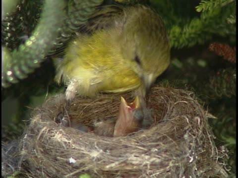close-up of a warbler feeding its young - cinque animali video stock e b–roll