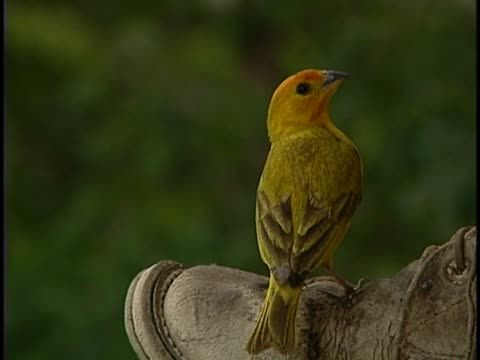 close-up of a warbler - warbler stock videos & royalty-free footage