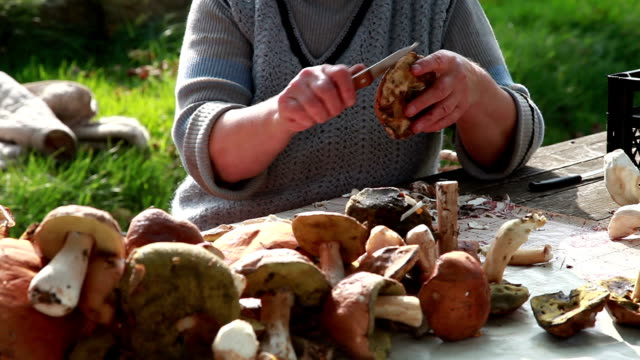 Close-up of a woman cleaning wild mushrooms