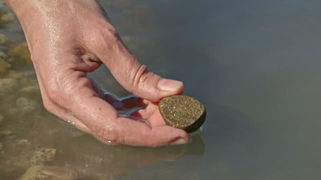 Close-up of a woman's hand as she inspects a glittering stone found in the Taiya River, Alaska, USA.