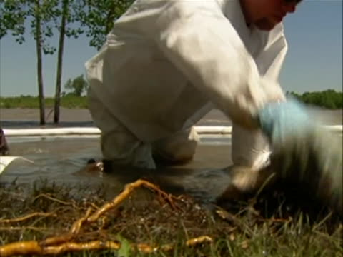 closeup of a worker blotting oil out of grass with paper towels after the exxon mobile spill at the yellowstone river a 12inch pipeline ruptured 150... - river yellowstone stock videos & royalty-free footage