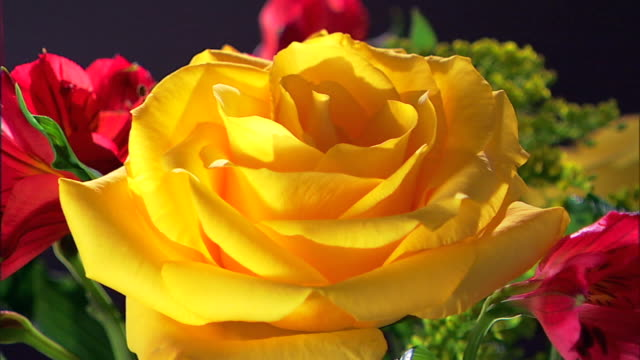 Close-up of a yellow rose that rack focuses to a blurry background.