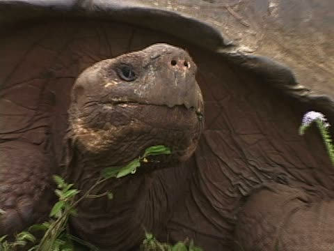 Close-up of a young man observing a Galapagos Giant tortoise