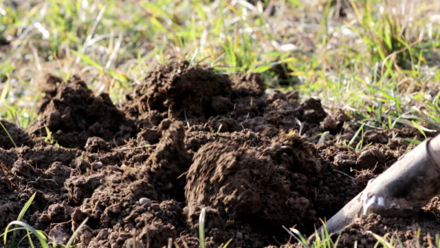 close-up of adult person digging a hole for plants on a meadow - digging stock videos & royalty-free footage