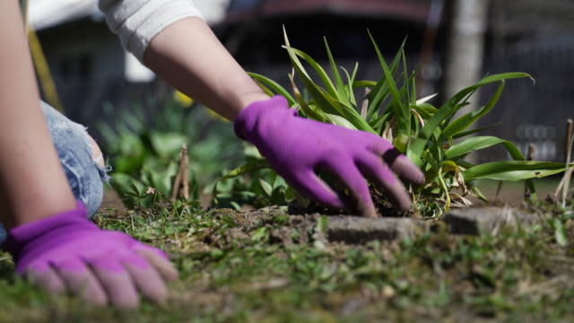 close-up of adult woman gardening - gardening glove stock videos & royalty-free footage