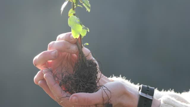 vídeos de stock, filmes e b-roll de close-up de mulher adulta segurando muda de árvore em palma da mão ao ar livre - stock video - raiz