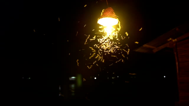 close-up of an old street lamp with insects at night - moth stock videos and b-roll footage