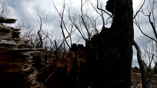 closeup of charred, burnt, dead tree trunk after bush fire - damaged stock videos & royalty-free footage