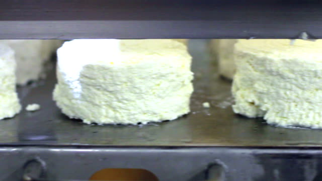 closeup of cottage cheese on production line. food production line. cheese on conveyor belt at dairy factory. production of dairy products. food plant. production of cheese - dairy factory stock videos & royalty-free footage