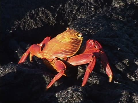 Close-up of crabs on rocks