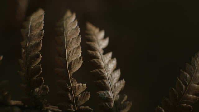 close-up of dappled light on three delicate bracken-like nothofagus stems in barrington tops national park, new south wales, australia. - dappled light stock videos and b-roll footage