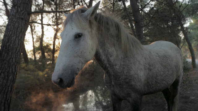 close-up of dirty white horse standing amidst trees in forest - camargue, france - cavalry stock videos & royalty-free footage