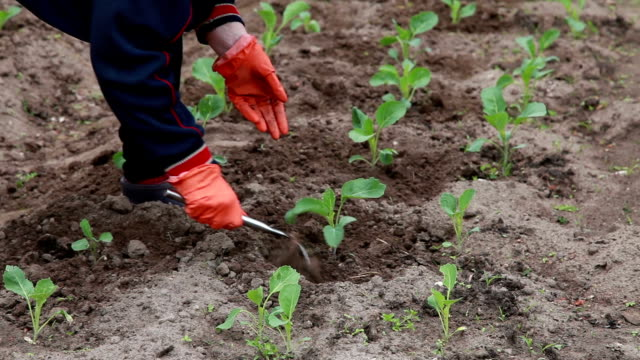 close-up of female farmer weeding the plants with a hoe - gardening glove stock videos & royalty-free footage