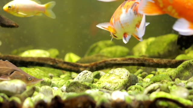 close-up of fish swimming in aquarium - tranquillising stock videos & royalty-free footage