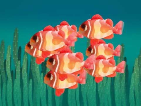 vidéos et rushes de close-up of fish swimming underwater - chiffre 9