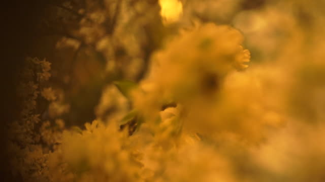 stockvideo's en b-roll-footage met closeup of flower bouquet - japan - uitfaden