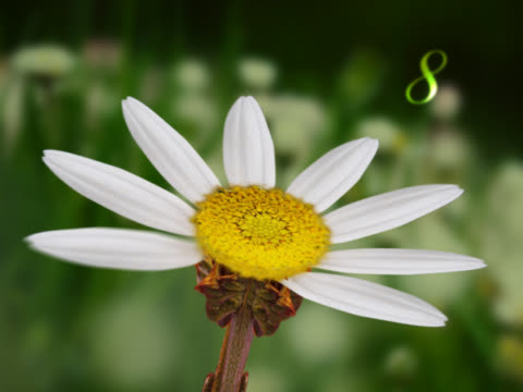 close-up of flower petals falling - zahl 9 stock-videos und b-roll-filmmaterial