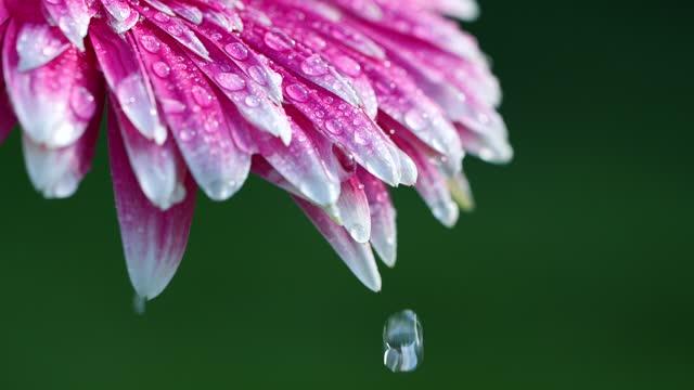 stockvideo's en b-roll-footage met close-up van bloem met waterdalingen - hd format