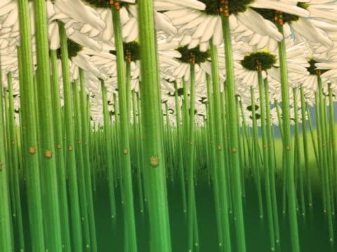 vidéos et rushes de close-up of flowers in a field - étamine