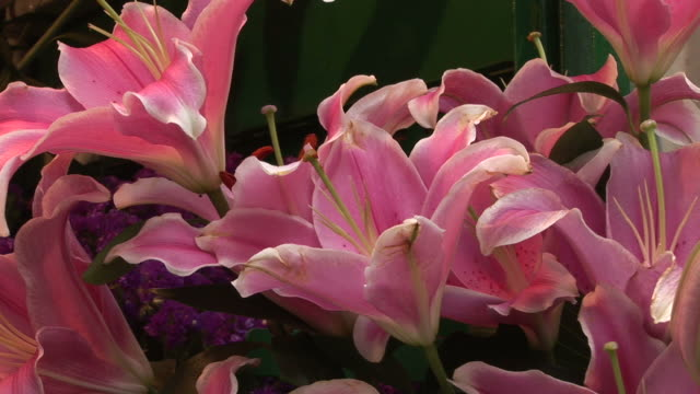Close-up of flowers in Hong Kong China