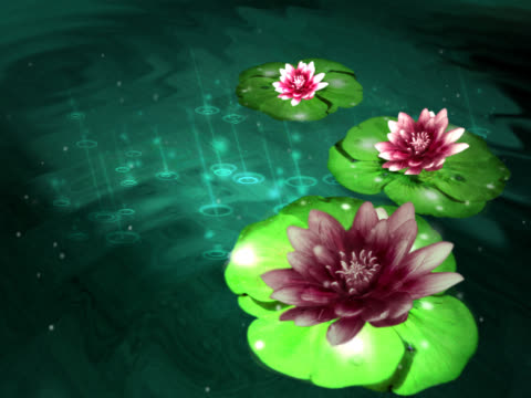 vidéos et rushes de close-up of flowers spinning and floating on water - étamine