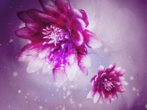 vidéos et rushes de close-up of flowers spinning - étamine