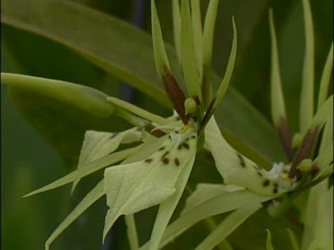 vídeos y material grabado en eventos de stock de close-up of flowers - grupo pequeño de animales