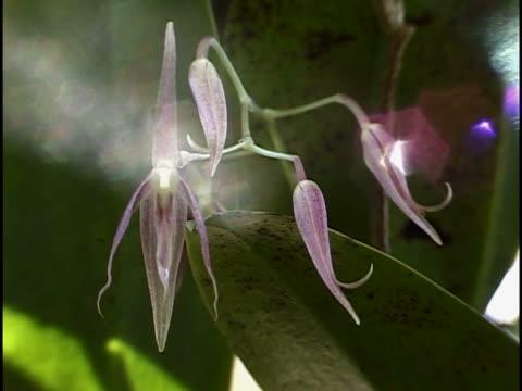 stockvideo's en b-roll-footage met close-up of flowers - meeldraad