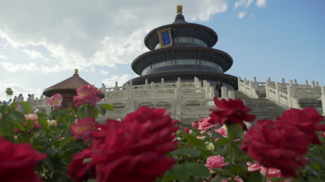 vidéos et rushes de close-up of fresh red flowers blooming against historic building - beijing, china - temple du ciel