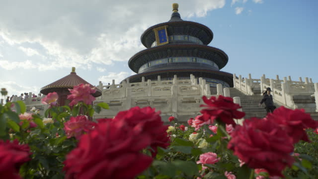 close-up of fresh red flowers blooming against temple of heaven - beijing, china - temple of heaven stock videos & royalty-free footage