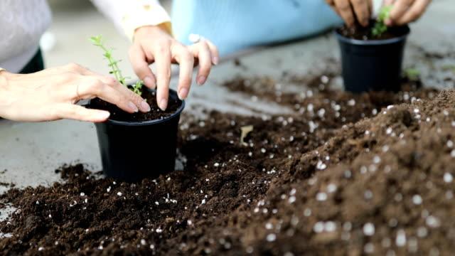 vidéos et rushes de plan rapproché des jardiniers plantant de nouveaux jeunes arbres - jardin potager
