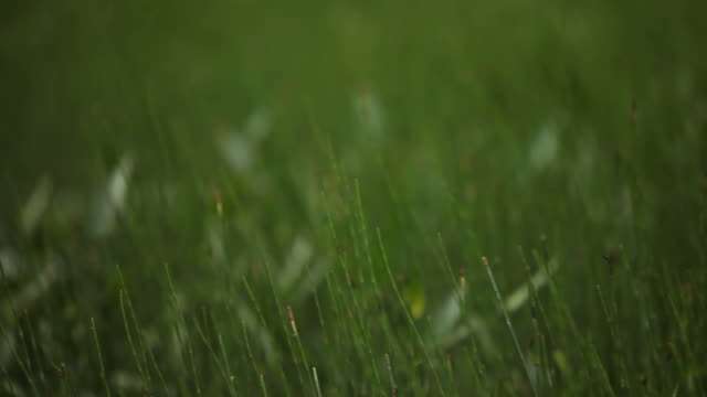 Close-Up of Grass on Lake in Canadian Wilderness