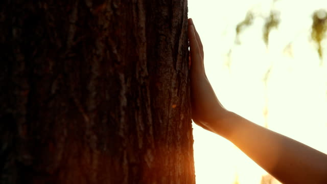 closeup of hand touching a tree - plant bark stock videos & royalty-free footage